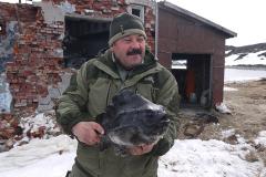 Морская рыба пинагор Мурманская область