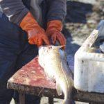 Рыбалка на маяке июнь 2017